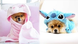♥Cute Puppies Doing Funny Things 2019♥ #9  Cutest Dogs