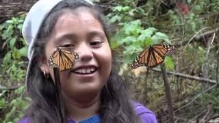 Monarchs - The Milkweed Mission