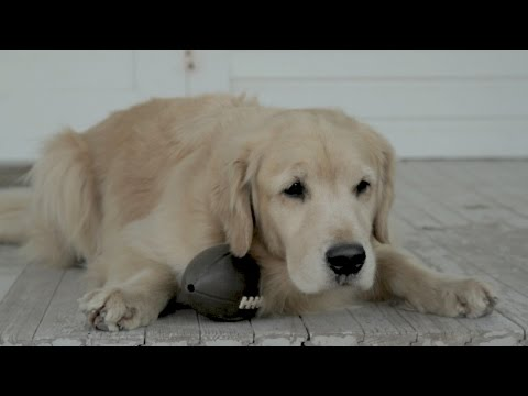 An Old Dog Remembers the First Puppy Bowl
