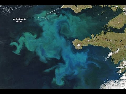 How Plankton Blooms Absorb CO2
