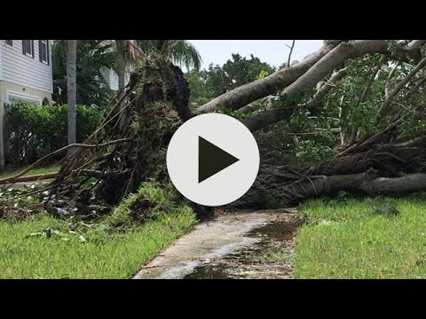 Hurricane Irma - The Morning After. St. Petersburg FL. Shore Acres Zone A huge fallen tree removal!
