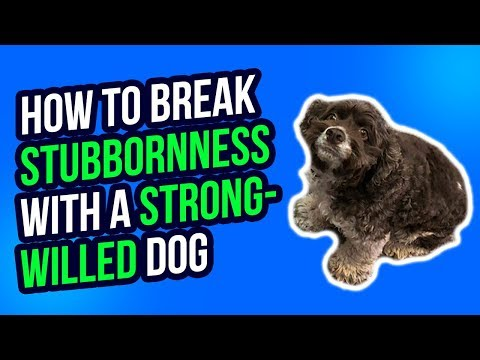 how-to-break-stubbornness-with-a-strong-willed-dog