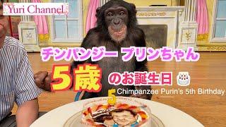 事故 パン 君 『志村どうぶつ園』VTRでパンくんは「恐怖に震えて…」霊長類学者が警告!