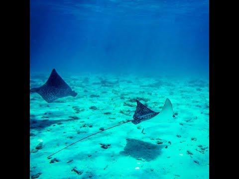 Grand Cayman Islands Stingray City, Snorkeling, And Starfish Point