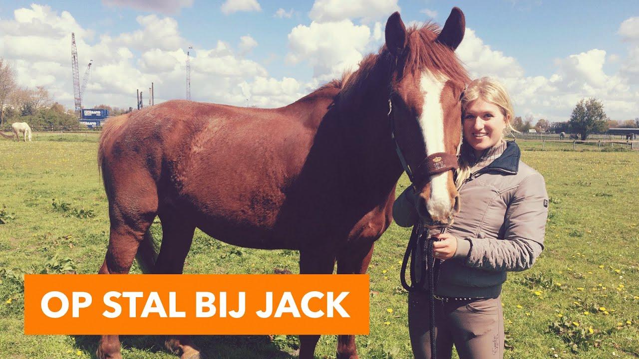 Op Stal Bij Jack Paardenpraattv Youtube