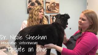Update on Olive! Acupuncture for rear leg lameness and fecal incontinence.