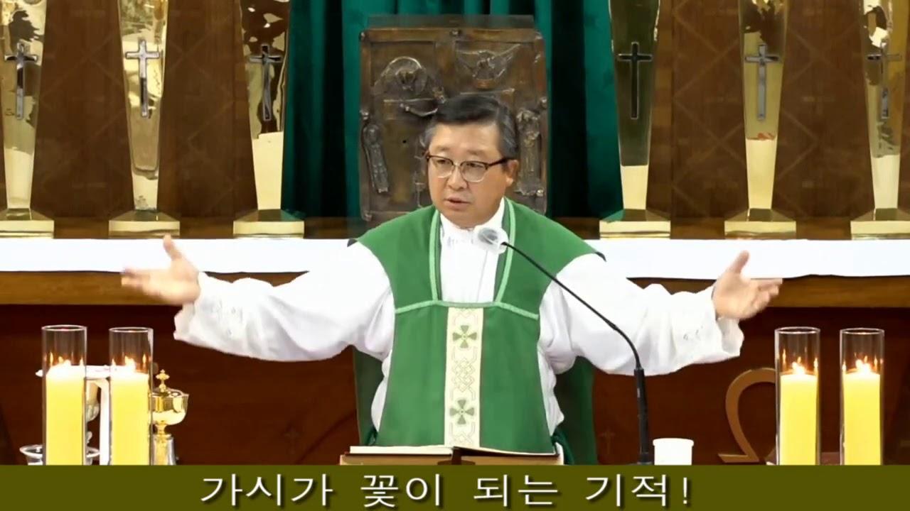 김웅열신부 강론(가시가 꽃이 되는 기적!)