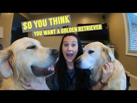 So You Think You Want A Golden Retriever | Watch To See If This Breed Is Right For You.