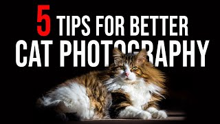 5 TIPS for better CAT PHOTOGRAPHY