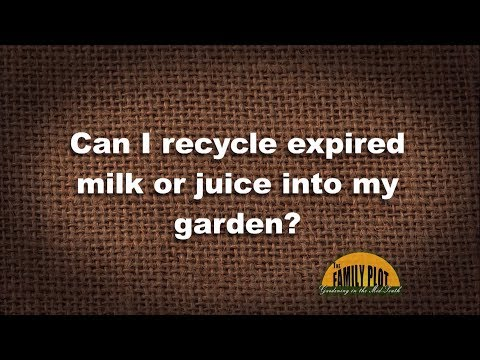 Q&A – Can I recycle expired milk or juice into my garden?