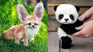 10 Самых Милых Детёнышей Животных
