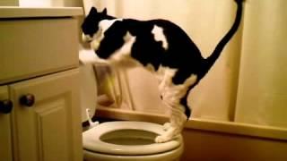 Приучить кошку ходить на унитаз. Система