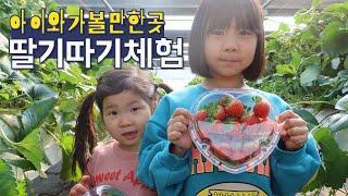 [아이와 가볼만한곳] 딸기따기체험 I 딸기 케익 만들기…