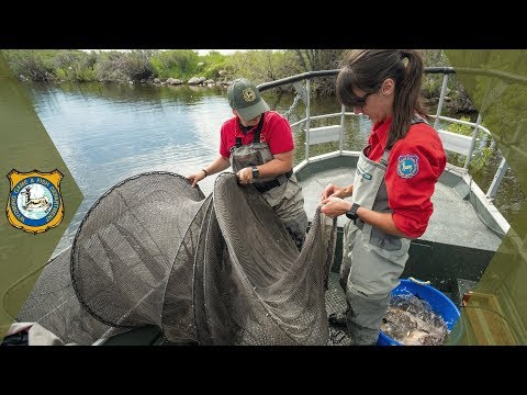 Trap Nets In Fish Sampling | Work In The Wild - Ep. 25