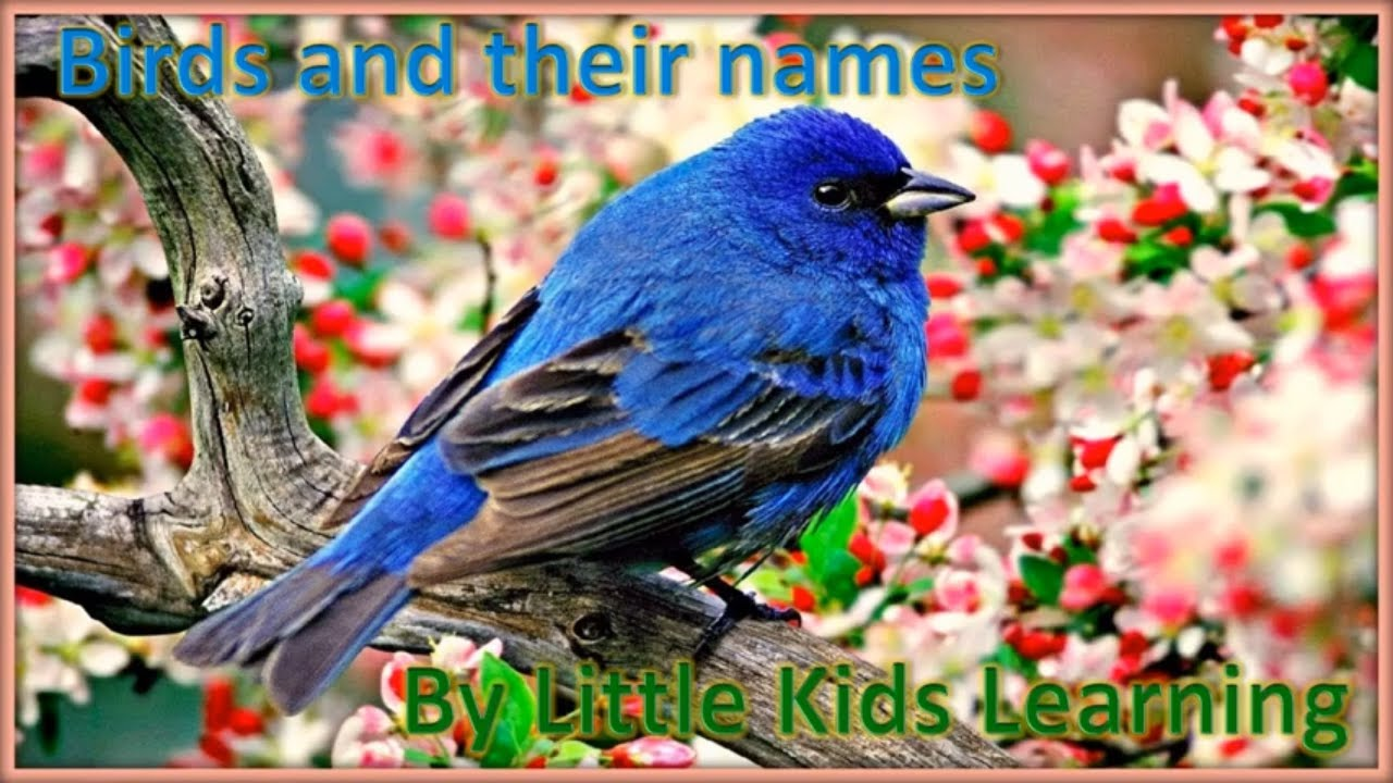 Birds and their names