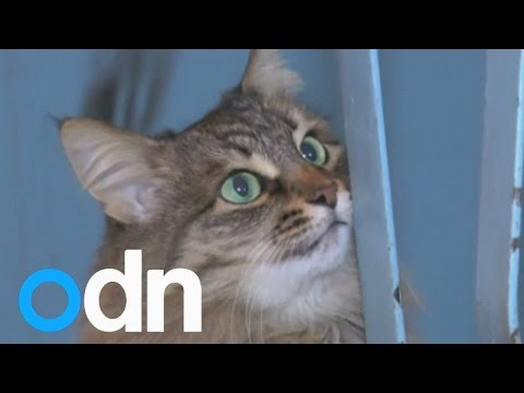 Stray cat 'saves' Russian baby's life