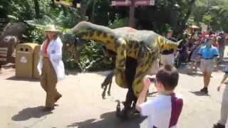 Val the Velociraptor at Disney's Animal Kingdom