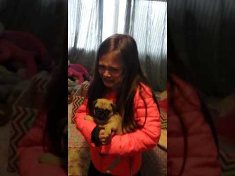 Ella's pug surprise