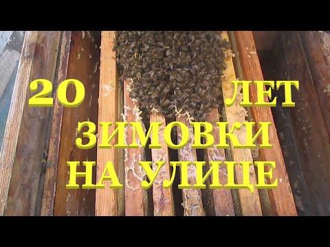Как лучше определить состояние зимующих пчел