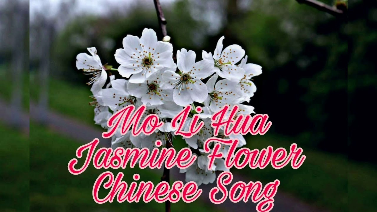 Mo Li Hua Jasmine Flower Chinese Song Youtube