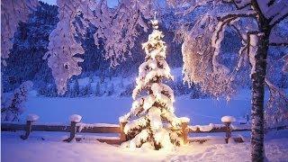 Ёлка пахнет Новым Годом - New Year tree smells(Обычай встречать Новый год с лесной красавицей уходит в древние времена и связан с культом зелени. Наши..., 2013-12-26T22:57:09.000Z)