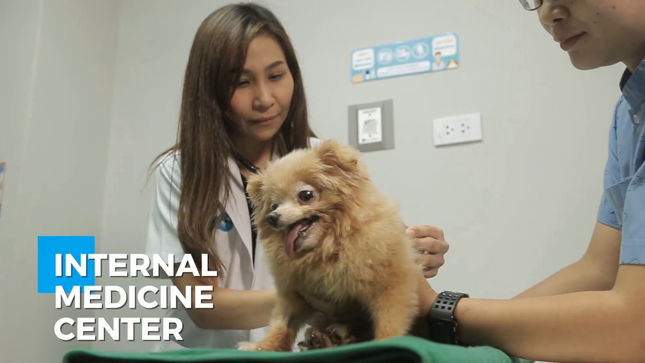 Total Solution - Thonglor Pet Hospital
