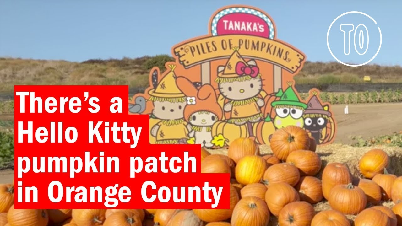 Explore Tanaka Farms Hello Kitty Pumpkin Patch