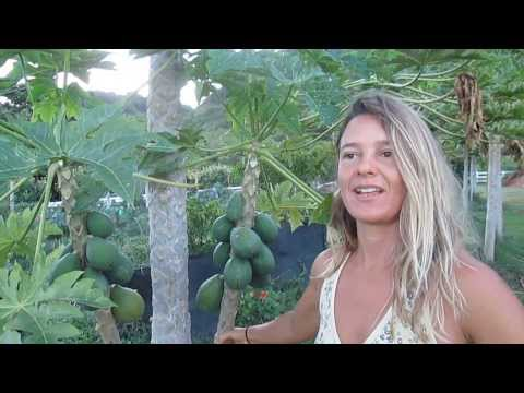 Perennial Vegetables in Hawaii with Tia