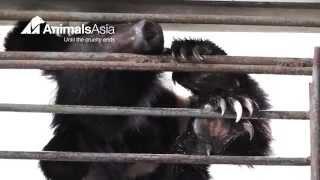 Peace by Piece - The bears of Nanning Bear Farm