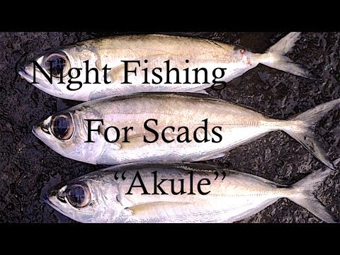 NIGHT FISHING FOR SCADS