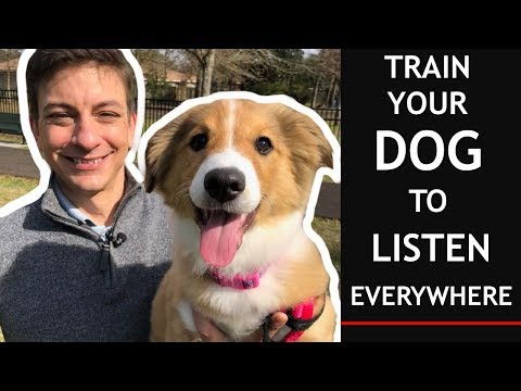 How To Train Your Puppy To Listen EVERYWHERE in 3 EASY Steps