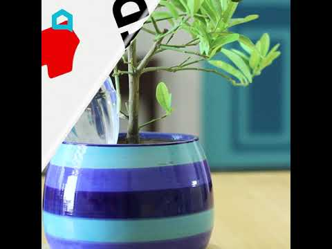 This Will Water Your Plants While You're Away!