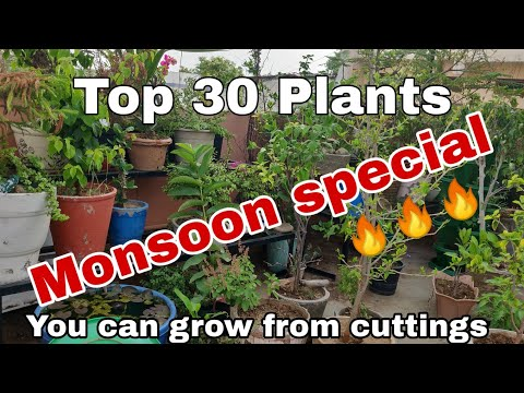 Top 30 Plants You Can Grow From Cuttings In Rainy Season, Cutting That Grown In Monsoon Season