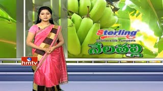 Nela Talli Weekend | Banana Cultivation Tips By Ideal Farmer Sambasiva Rao | Guntur | HMTV
