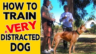 How to TRAIN a Distracted DOG using REWARDS and CORRECTIONS