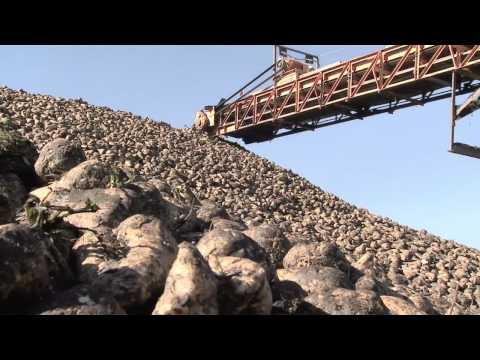 Special Episode: Sugar Beet Harvest  - America's Heartland