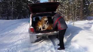Решётка для перевозки собак в автомобиле