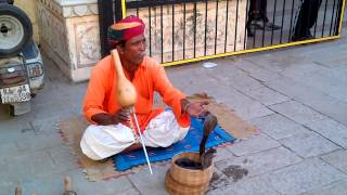 """SNAKE CHARMER PLAYING 'CHARMER'S FLUTE"""" FOR 2 COBRAS IN UDAIPUR, INDIA"""