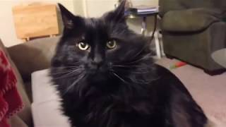 Funny cats and why we love them compilation