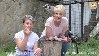 Мы в гостях у лемуров. Тайган | We are visiting lemurs. Taigan