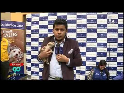 Municipalidad de Lima pone en adopción mascotas que fueron rescatadas