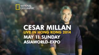 Cesar Millan Live In Hong Kong 2014 - May 11th At Asiaworld-expo