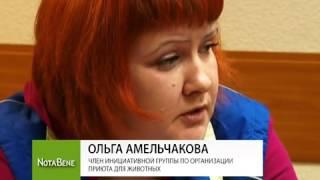 Саяногорск атакуют бездомные собаки
