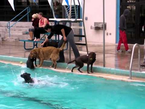 Pooch plunge at carson city aquatic center youtube - City of carson swimming pool carson ca ...
