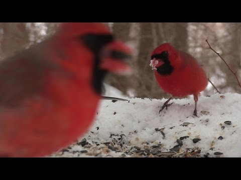 Birds eating on snowy ground 2/16/2015