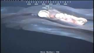 Câmeras da Petrobrás descobrem verdadeiro monstro no fundo do mar
