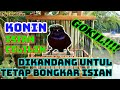 Kolibri Ninja Gacor Isian Cililin Di Kandang Untulan  Mp3 - Mp4 Download