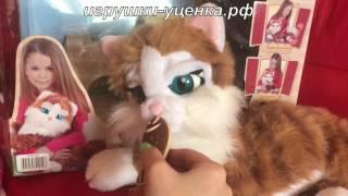 кошечка черри   кошка  Cherry