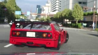 【超貴重】F40に遭遇‼︎ バチバチ音と加速音が凄まじい‼︎ F40 on the road in Tokyo