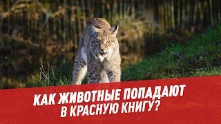 Как животные попадают в Красную книгу? - Хочу всё знать